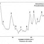 Pseudomalachite (FTR)